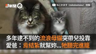 多年逮不到的流浪母貓突帶兒投靠 愛爸:肯結紮就幫妳...牠聽完進籠