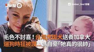 毛色不討喜!台灣虎斑犬送養加拿大  遛狗時狂被讚...媽自豪「牠真的很帥」