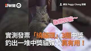 實測發票「繞貓頭」3圈中獎 釣出一堆中獎貓奴:真有用!