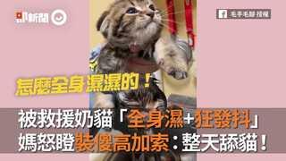 被救援奶貓「全身濕+狂發抖」 媽怒瞪裝傻高加索:整天舔貓!