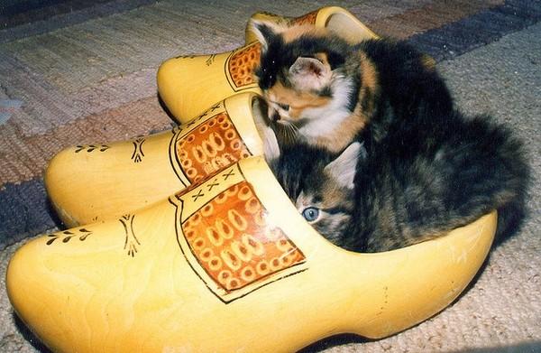 q版鞋猫!可爱小猫帮主人试鞋 一只窝一脚刚刚好!