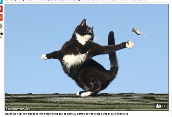 飞来飞去!捣蛋猫咪根本「杂技团」 把小老鼠当球抛