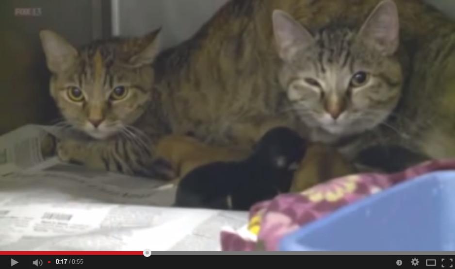 猫妈妈凯特让狗狗吸母乳.(图/翻摄自youtube)