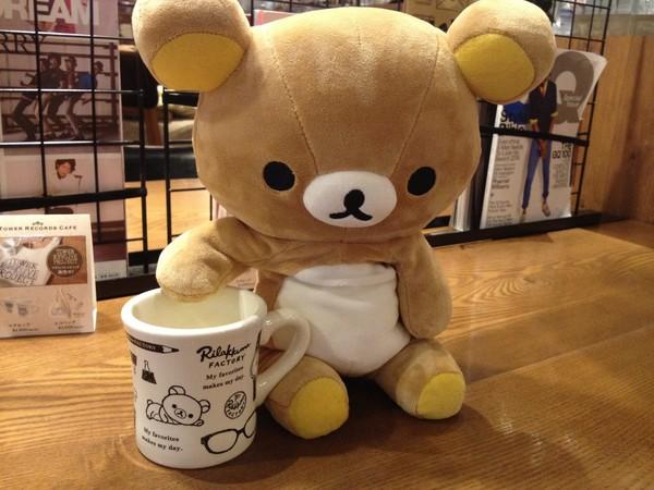 茶杯熊图片大全可爱