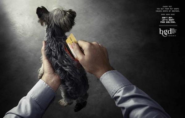 公司智威汤逊(jwt)日前帮伊斯坦堡动物保护协会设计一系列平面广告