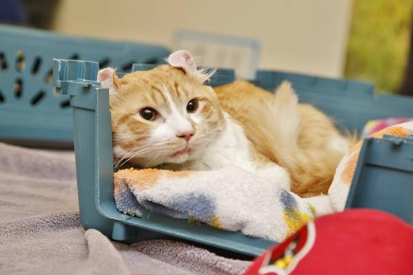 上发现了一只依偎在铁丝网旁的橘猫,他下车徒步走去观察猫咪的情形时