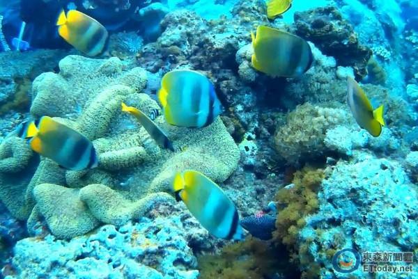 壁纸 海底 海底世界 海洋馆 水族馆 桌面 600_401