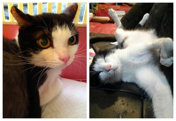 想像喵星人被领养的生活! 猫疯子用绘画替流浪猫找家