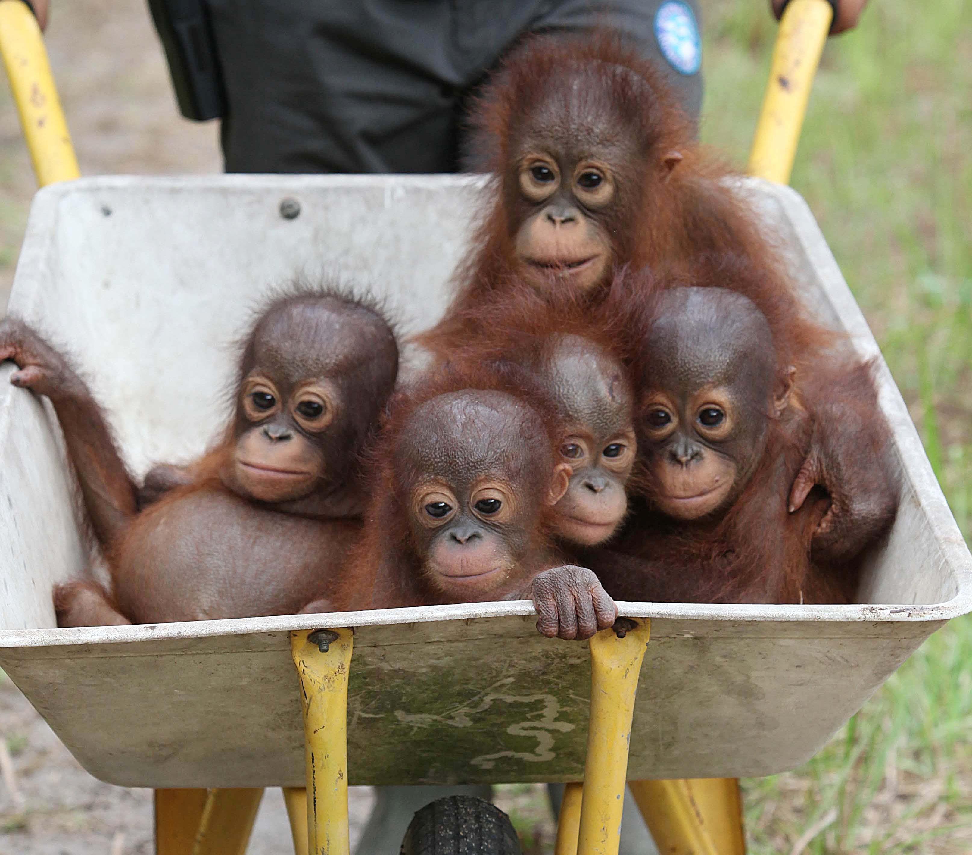 国际中心/综合报导 印尼国际动物救援中心(iar)一直以来都致力於拯救