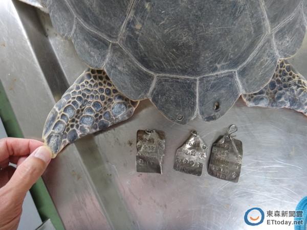 他指出,海龟刚到海生馆时,不愿意进食,还在排泄物中发现塑胶袋和