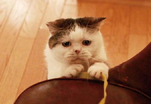 壁纸 动物 猫 猫咪 小猫 桌面 524_362
