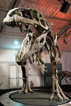 英国恐龙冒险乐园(图/dinosaur adventure粉丝页)