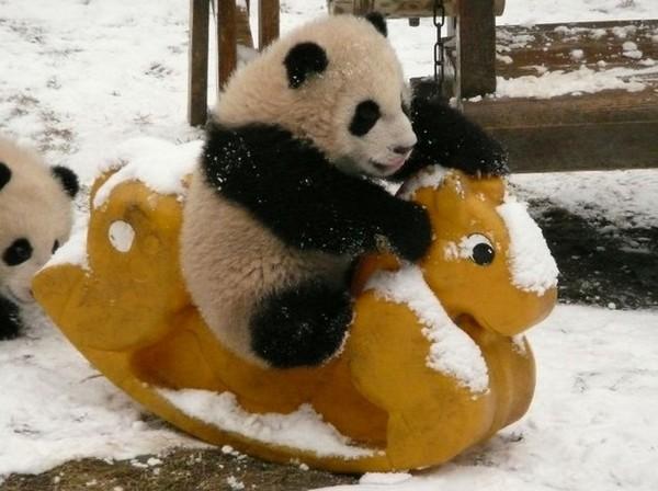 全世界最可爱托儿所 大熊猫们入园罗! | 键盘大柠檬