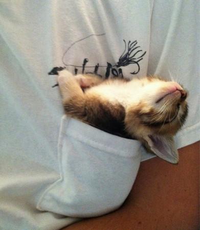 史上最萌「睡睡猫」照片大集合
