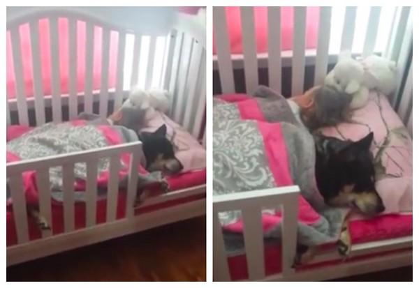 Z psem w łóżku