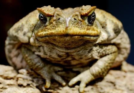 傻了?南韩大叔「想吃牛蛙却误食蟾蜍」 爆吐医院后升天
