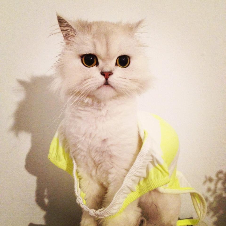 不知道什麼原因都会有样很可爱的小东西穿梭在内,那就是「猫咪」,不管