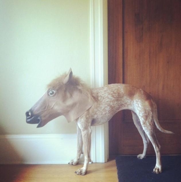 有外星人 萌犬x马头,无违和诡异萌