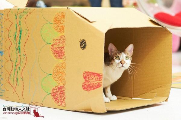 小朋友做纸箱猫屋,现场有「猫监工」(图/taha台湾动物人文社)