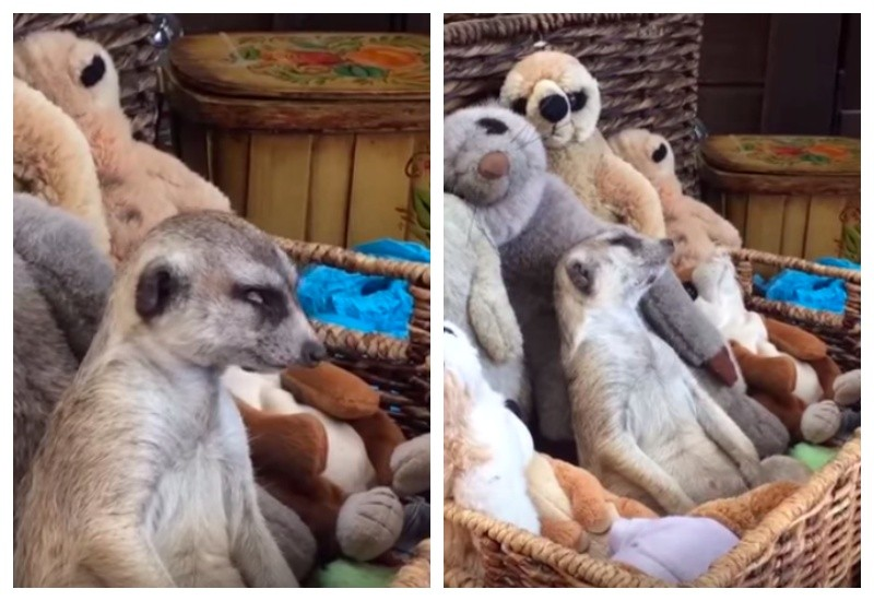 动物惊醒gif