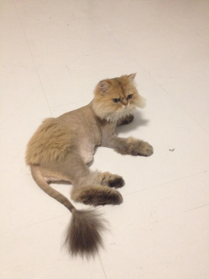 壁纸 动物 猫 猫咪 小猫 桌面 720_960 竖版 竖屏 手机