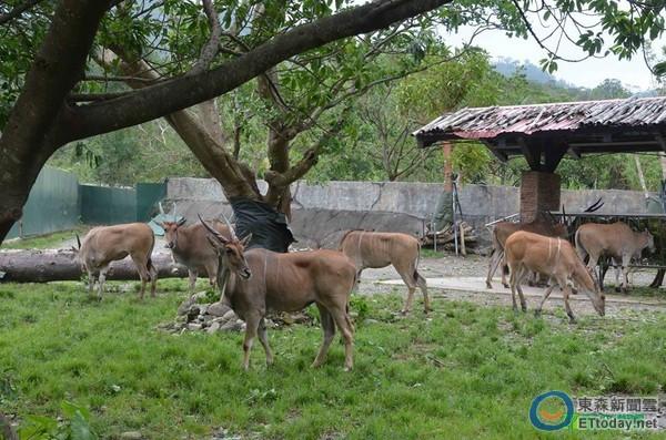 杜鹃扫断120株树!动物园休园清理 白犀牛放风滚泥巴