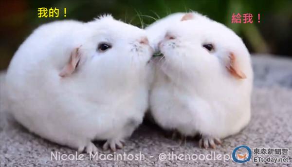 兔子图片委屈可爱