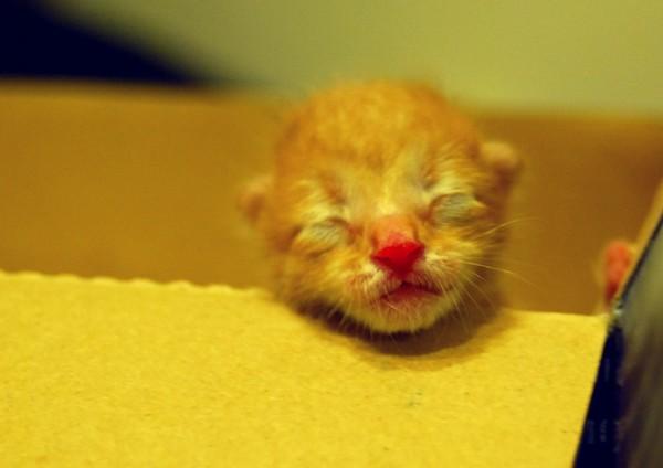 名家 宠物动物 2012年08月8日 11:26  加菲十分可爱,有个鲜红的鼻头