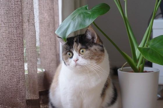 超级可爱龙猫壁纸