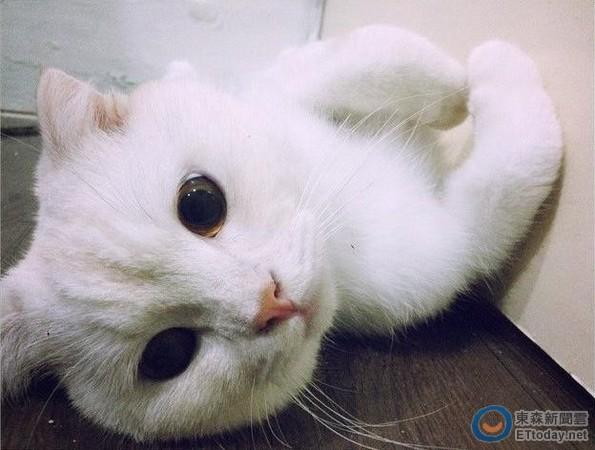 ▼momo:虽然我很可爱,可是大家还是要记得不要购买