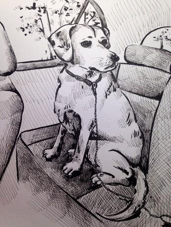 一笔一笔画出你的爱!线条画出超暖心宠物故事