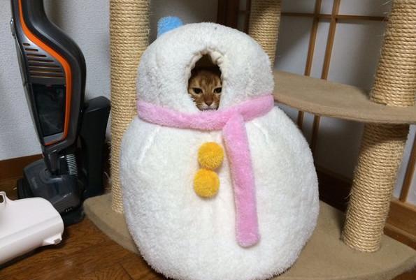 奴才眼光真好,買了一個好東西回家!(圖/twitter: @kyoumetan) 生活中心/綜合報導 貓奴的樂趣之一就是幫主子們找各種可愛的玩具、貓窩、衣服等等,如果看到「大降價」又超可愛的相關商品,一定馬上失心瘋。日本網友常在推特 @kyoumetan分享貓咪的生活趣照,她最近發現了一個「雪人貓窩」,跳樓大拍賣的價格讓她立刻買了一個回家,而主子超賞臉的樣子實在是超有趣。 日本人的創意實在是讓許多人甘拜下風,最近日本網友發現有個雪人貓窩竟然從原本的3980日幣,大降價只賣