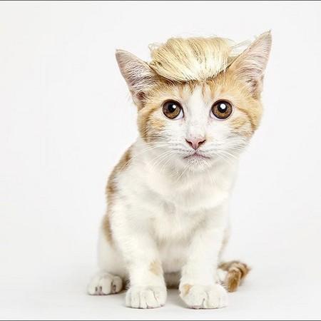 想要「戴帽子的猫」不再流浪!