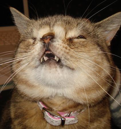 壁纸 动物 猫 猫咪 小猫 桌面 423_450