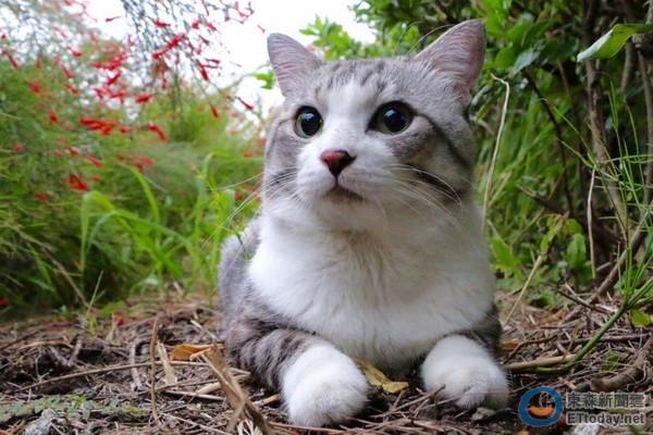 人气猫「喵吉」全程陪老婆生产 专注地看了整整5小时