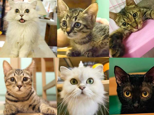 这些可爱的猫咪都在等温暖的家喔!(照片由苏活零工坊提供)