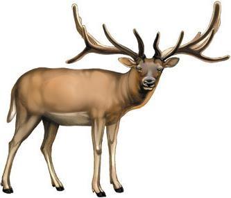 麋鹿就是「四不像」,圣诞老人若驾著它出去发礼物