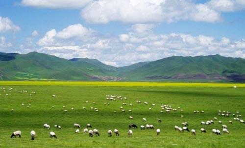 风吹草低见牛羊,甘肃省甘南藏族自治州临潭县冶力关魅力风景.