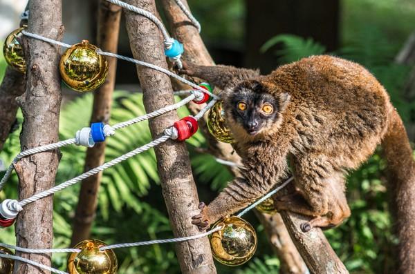 动物园「环保圣诞树」藏礼物
