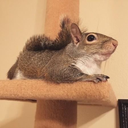 在滑鼠旁边卖萌!「被飓风吹来的松鼠」成为ig大明星