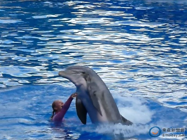紧接著重头戏是海豚登场,它们从转圈圈,载著主角乘风破浪,甚至把人抛
