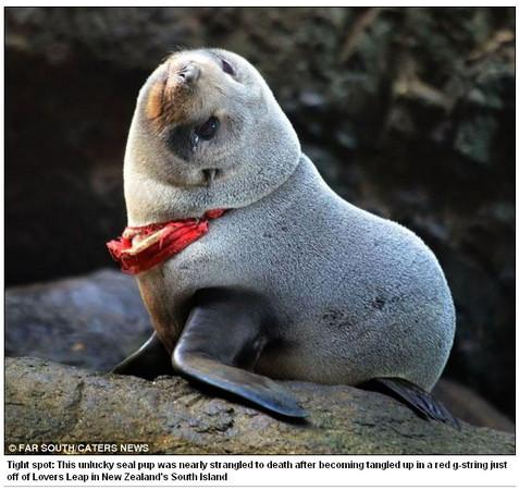 环保部门呼吁,乱丢垃圾威胁了野生动物,请游客丢东西前要三思.