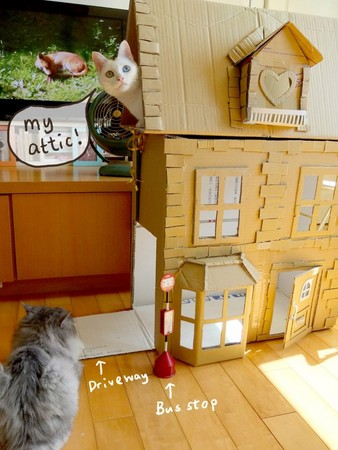认真魔人!插画家帮猫做「纸箱别墅」 不怕被「都更」