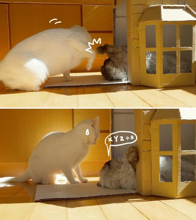 猫做「纸箱别墅」