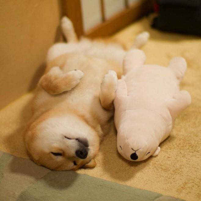 超轻粘土可爱柴犬