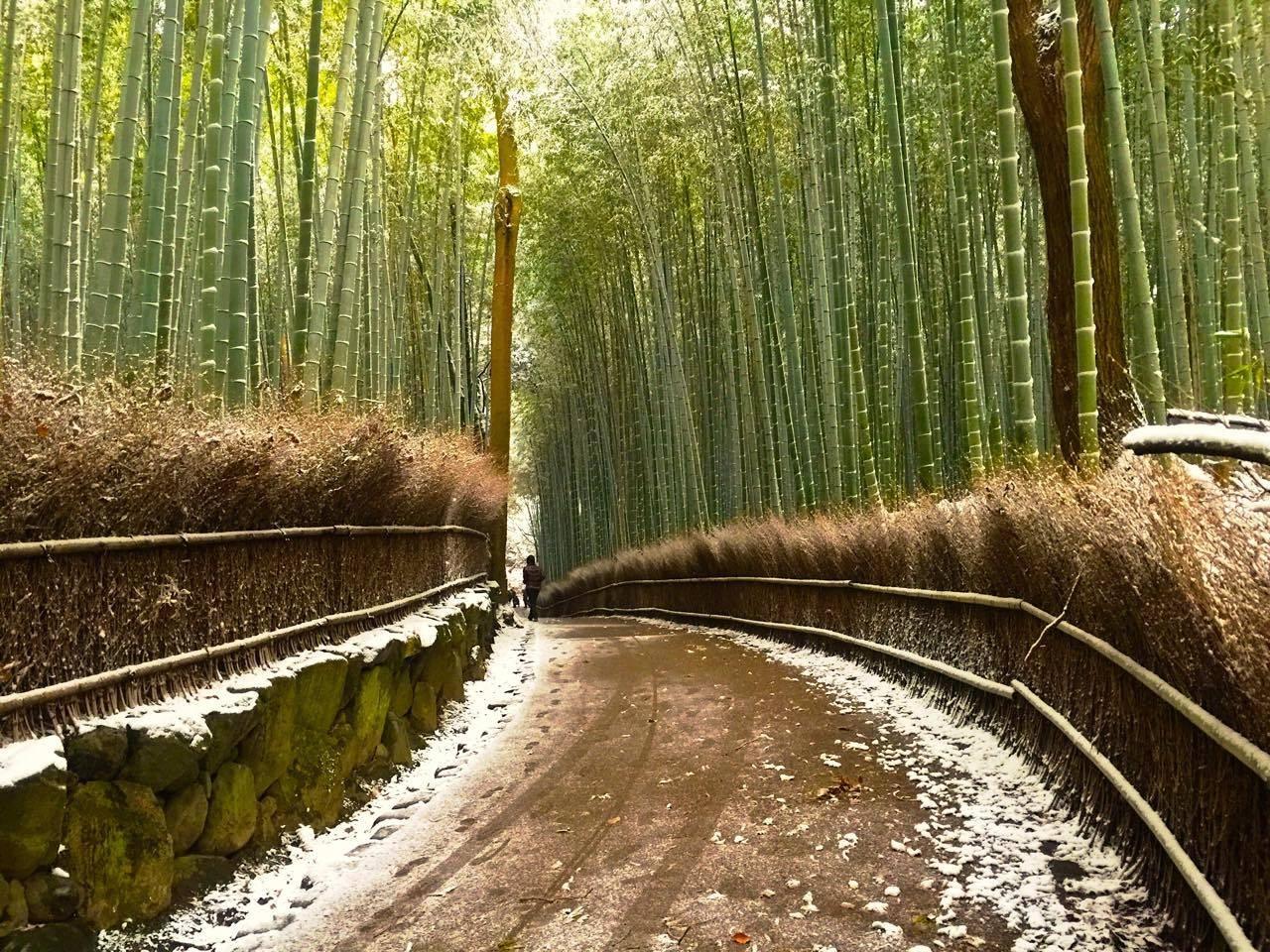 金阁寺,岚山竹林上「雪妆」 恬静的大自然冬季美景图片