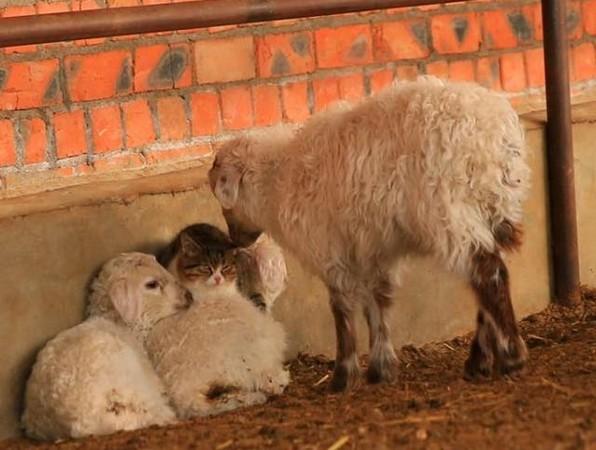 动物冬季取暖图片