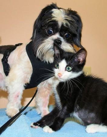可爱猫狗合照图片