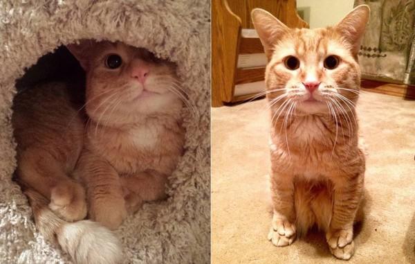▼最近这只橘猫的可爱坐姿在网路上爆红.(图/翻摄自instagram