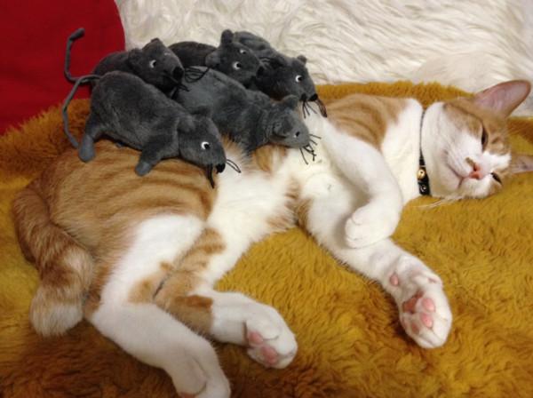 壁纸 动物 狗 狗狗 猫 猫咪 小猫 桌面 600_448